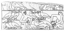 File source: https://commons.wikimedia.org/wiki/File:Egyptiangeesefeeding.jpg
